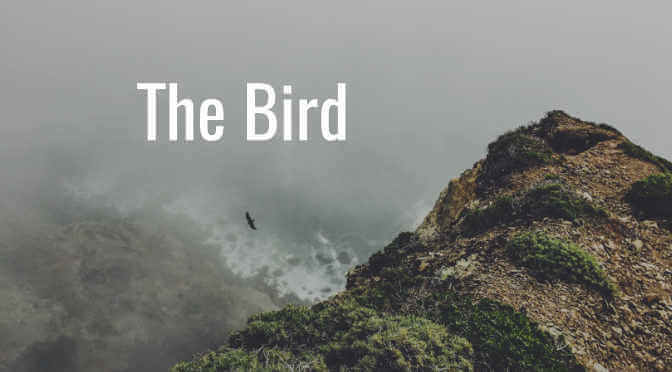 The Bird Title Page