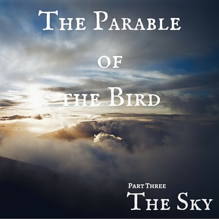 The Parable of the Bird Pt. 3