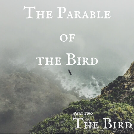 The Parable of the Bird Pt. 2